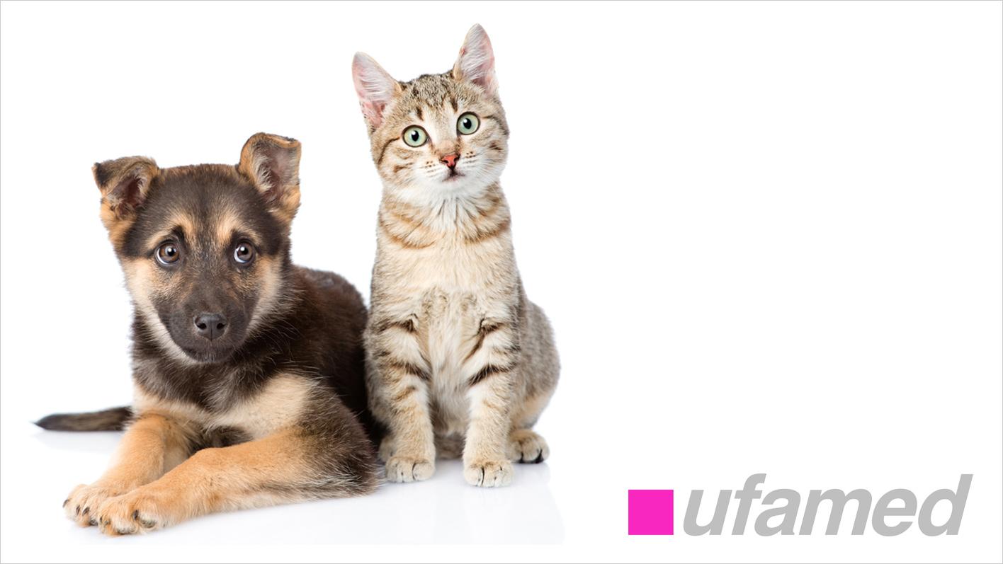 Arzneimittel, Diätetika und Spezialitäten rund um die Tiergesundheit: TopPharm Apotheke Küttigen