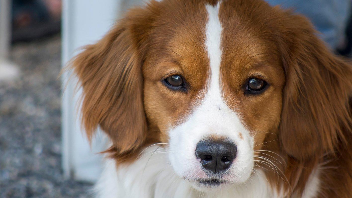 Heilmittel für Tiere – TopPharm Apotheke & Drogerie Sissach