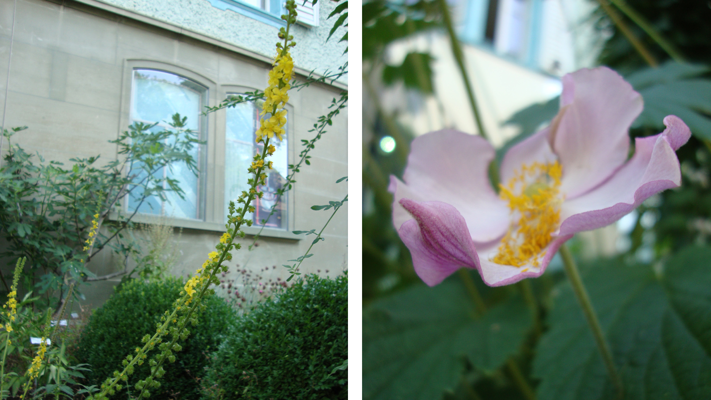TopPharm Apotheke Zbinden - Burgdorf: Unser Garten